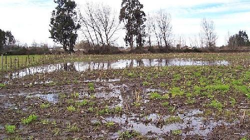 Según la UBA se superó la capacidad de absorción de los suelos