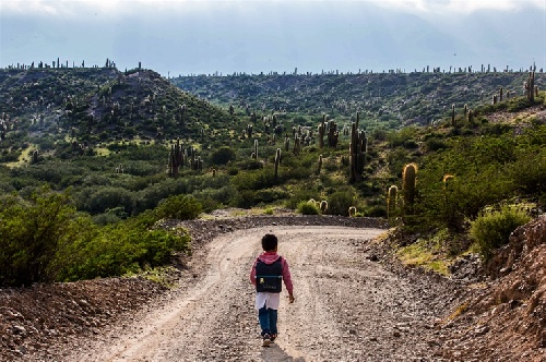 El viaje de Ulises: más de una hora de caminata por el descampado,entre los cardos,  para poder estudiar