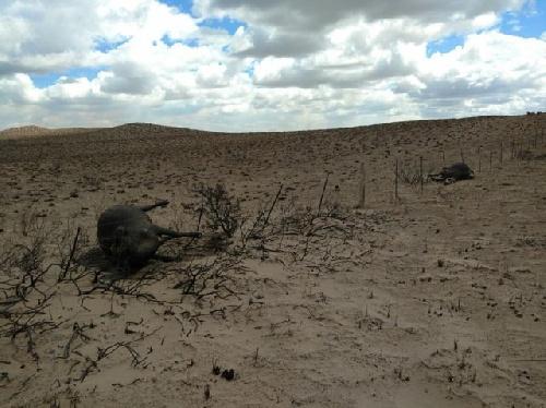 Se quemaron 40.000 hectáreas en Algarrobo