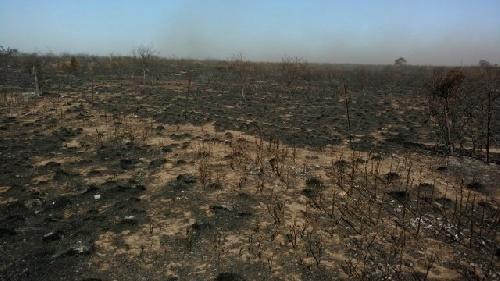 Un voraz incendio originado en La Pampa  avanza sobre Algarrobo