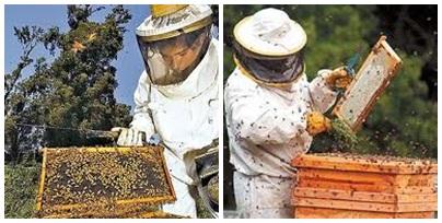 Convocatoria a los apicultores para actualizar inscripcion en RENAPA