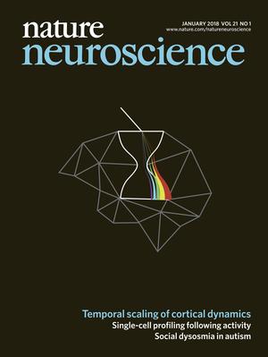 """Una científica argentina halló una región clave de la """"memoria RAM"""" del cerebro"""
