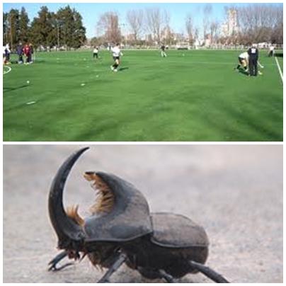 "Fumigacion en Parque Municipal para control de plaga ""Bicho torito"" (Diloboderus abderus)"