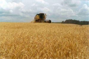 La cosecha de trigo comenzó con un rendimiento superior al previsto
